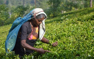 Women in Supply Chains: On the Frontlines of COVID-19's Impact