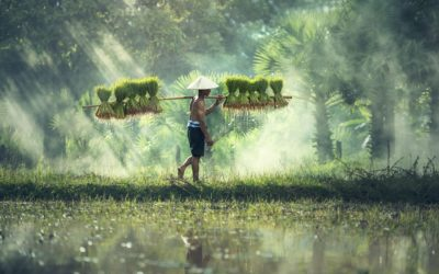 Why food companies need to step up on human rights in global supply chains