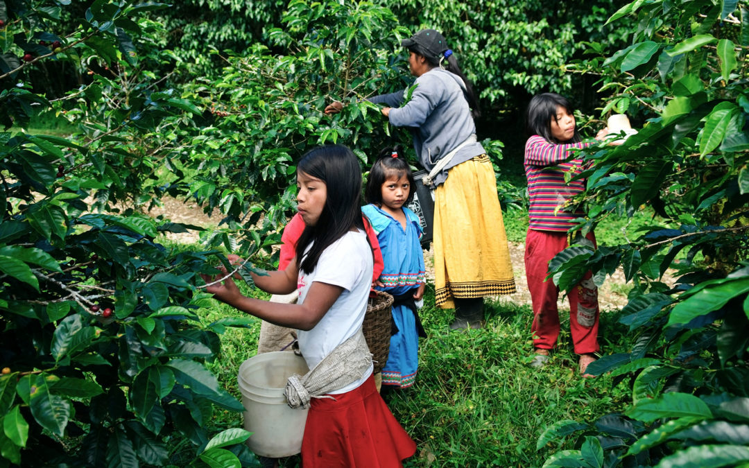 Taking next steps to end child labour in global supply chains