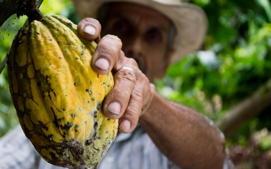 Cocoa companies call for human rights and environmental due diligence requirements
