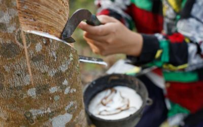 Building a Smallholders-Inclusive Platform for Sustainable Natural Rubber