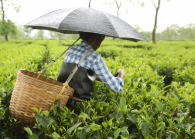 Addressing the Human Cost of Assam Tea: An agenda for change to respect, protect and fulfil human rights on Assam tea plantations