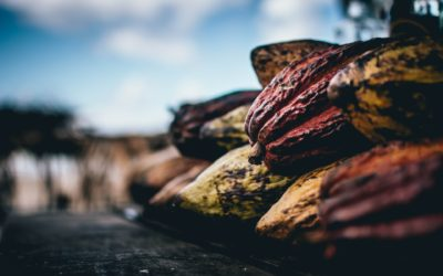 Child labour still prevalent in West Africa cocoa sector despite industry efforts