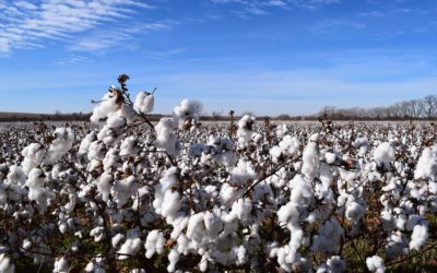 Can the stain of forced and child labour be removed from cotton?