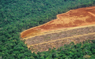Indigenous peoples sue retailer Casino over Amazon destruction
