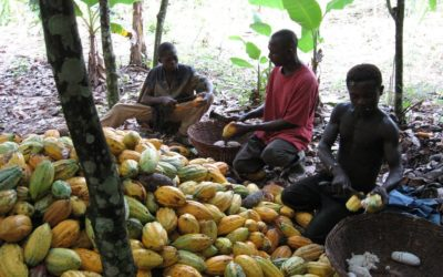Ivorian Cocoa Farmers Are Beating A System To Reduce Child Labour: Here's How